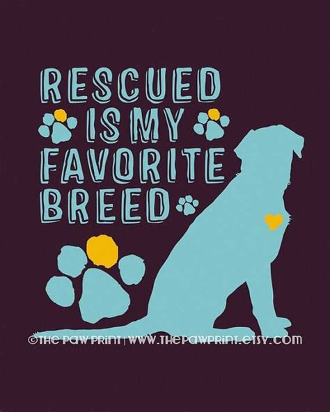 rescue dogs maine rescue quote tlc house pet sitting llc