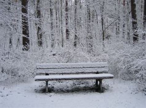 bench winter bench in winter forest photo free download