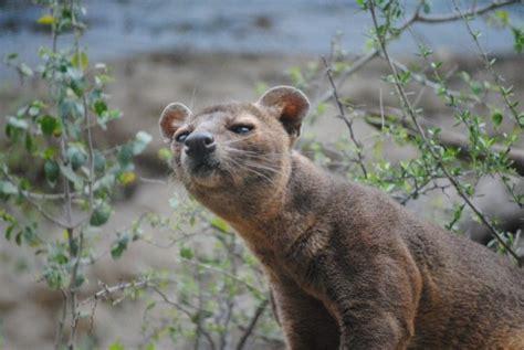 endemic madagascar wildlife afro tourism