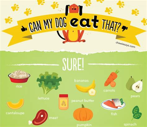 can you eat dogs while chart can my eat that designtaxi the bulletin board dogs