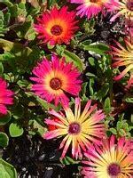 elenco di fiori in ordine alfabetico elenco piante grasse in ordine alfabetico