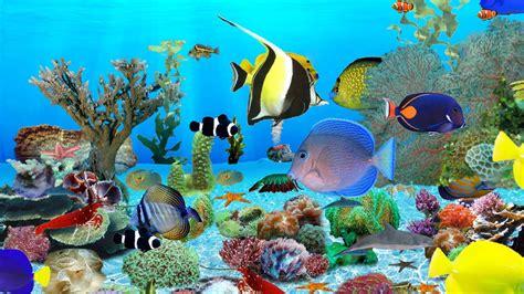 wallpaper bergerak windows  aquarium  images