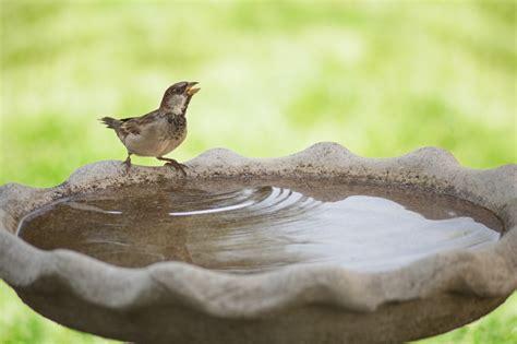 make your garden bird friendly in 2016 news features