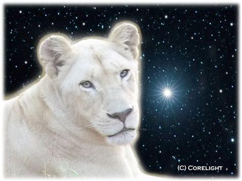 imagenes de leones albinos los leones blancos hijas de la tierra