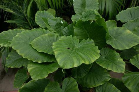 sun tropical plants tropical plants