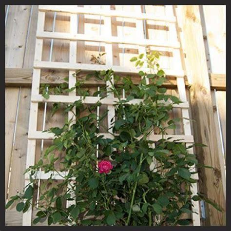Vertical Gardening Trellis Ideas 17 Best Images About Vertical Gardening Trellises On