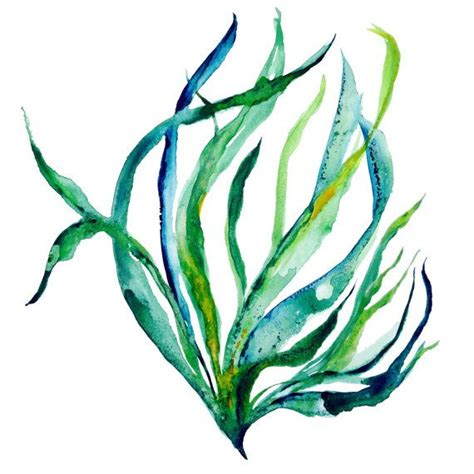 seaweed color seaweed clipart watercolor pencil and in color seaweed
