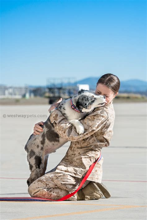 dogs on deployment california dogs on deployment is