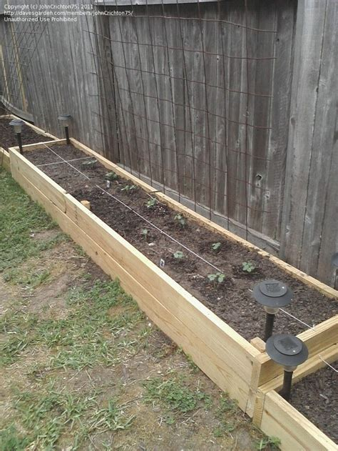 Raised Garden Fence Ideas Pin By On Fence Pinterest