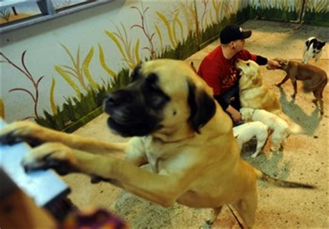 dog attack news dog daycare dog boarding and dog residents owners of arbor dog daycare at odds over expansion