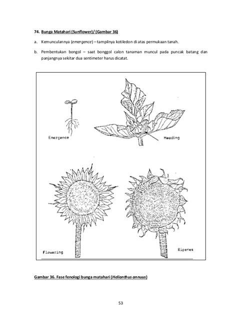Collection of gambar diagram bunga asoka image collections how to gambar diagram bunga asoka image collections how to gambar diagram bunga matahari choice image how to ccuart Images