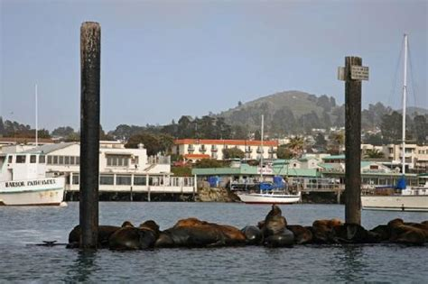 at the helm boat rentals morro bay red anchor charters morro bay all you need to know