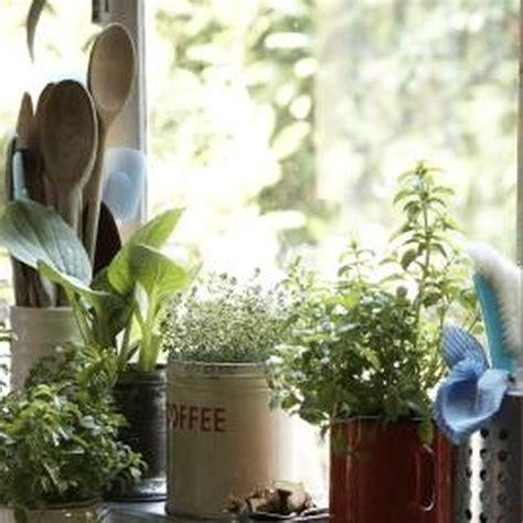 rid  fruit flies  indoor plant soil