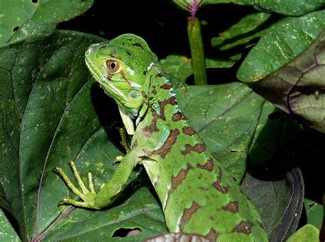 imagenes de animales de la selva garden fotos gratis naturaleza hoja animal fauna silvestre