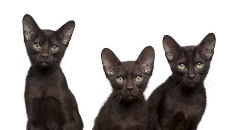 spayed cost what does it cost to get a kitten spayed