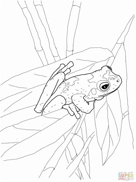 coloring pictures of tree frogs tree frog coloring pages coloring home