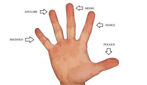 la mano sulla i nomi delle dita della mano in italiano il di