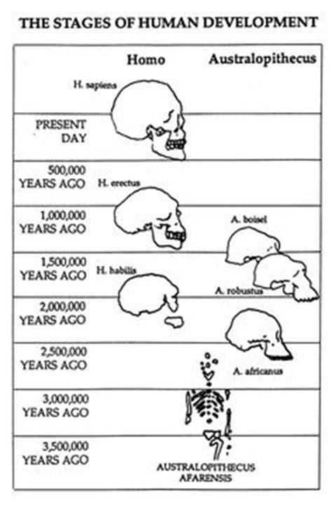 1000+ images about Early Man-Human Evolution on Pinterest