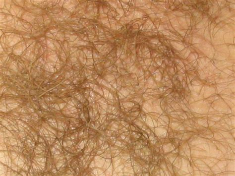 heavy pubic hair fat mons pubis on a woman newhairstylesformen2014 com