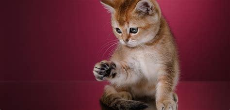 Was Kostet Eine Schiebetür by Was Kostet Eine Katze