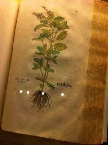 alimenti basificanti le erbe aromatiche dr ssa marcella tracco biologa