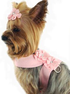 teacup yorkie harness 1000 images about yorkies