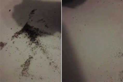 hotel pennsylvania bed bugs skin crawling video filmed by disgusted guest shows hotel