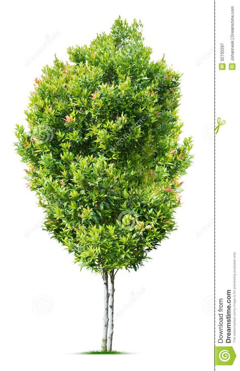 small tree royalty free stock photography image 32735597