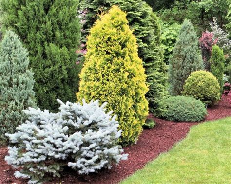 sneak preview of a conifer garden on an american conifer society tour conifer city
