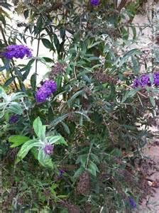 Garden Flower Identification Plant Identification Purple And White Flower Id 1 By Supriyakumar
