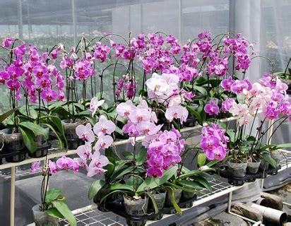 jenis tanaman hias bunga  ciri cirinya