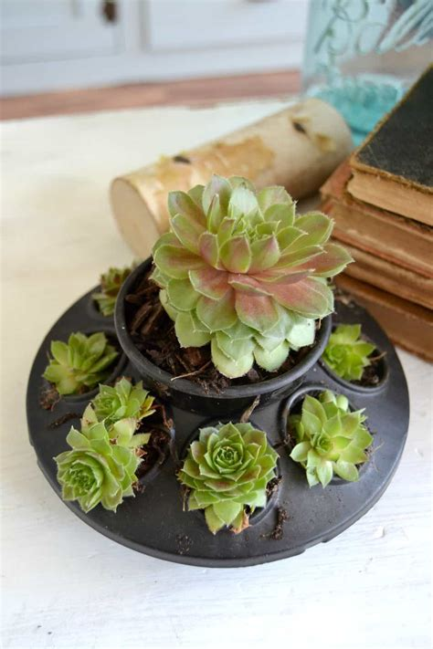 succulent planters diy succulents planter diy in 30 my creative days