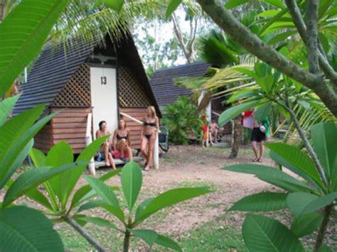 magnetic island bungalow bay bungalow bay koala magnetic island australia