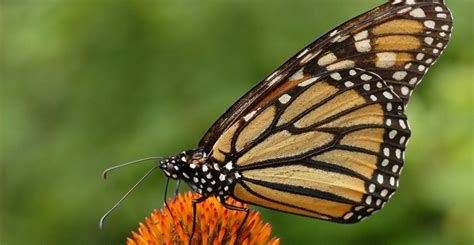 what colors attract butterflies ask forget 8 plants that attract butterflies and