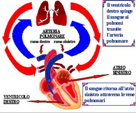 apparte o a parte dizionario circolazione polmonare