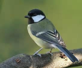 Bird common bird twitter