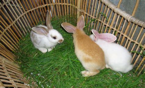 Sisir Untuk Kelinci makanan kelinci yang baik ragam info