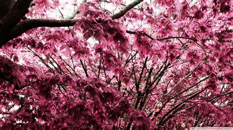 wallpaper pink leaves pink leaves widescreen flower
