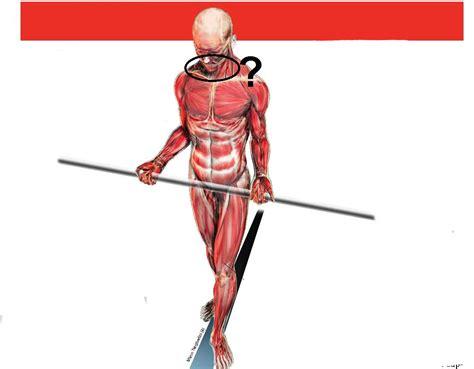 test muscolari test muscolari appimlab pagina 8