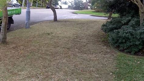 couch grass weed killer lawn care tips sir walter weed control couch lawn