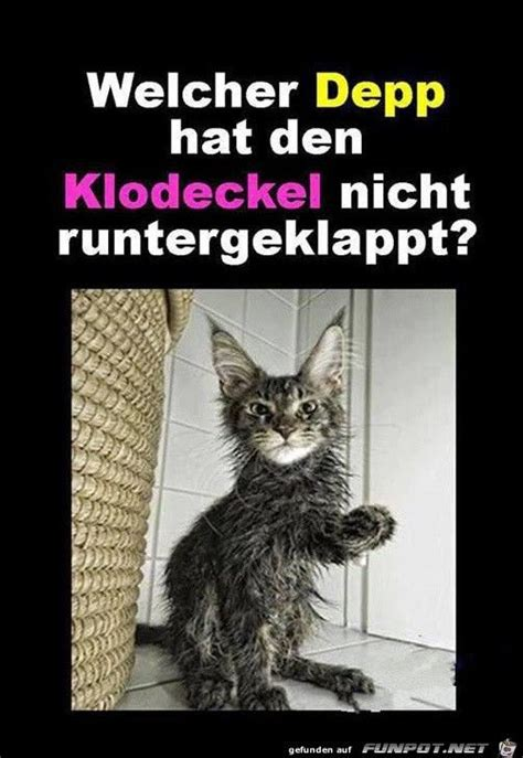 Katzen Meme - katzen meme 28 images die besten 20 kuschel humor