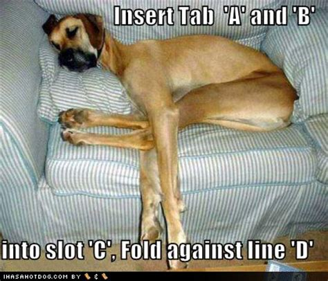 all about funny pictures collection: funny dogs pictures 2012