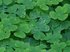 the sicilian shamrock cultural fusions of the italian