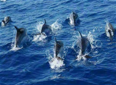 5 star catamaran gran canaria dolphin playa catamaran gran canaria boat trips