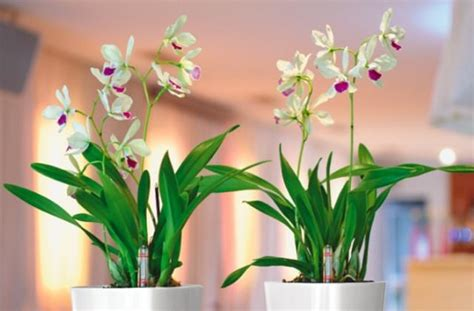 come curare piante da appartamento piante da appartamento e semplici da curare pagina