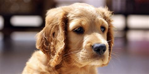 what breed should i get breed selector what should i get the happy puppy site