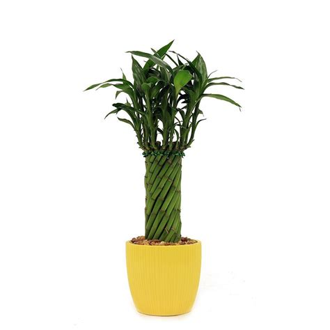 Walmart Lucky Gift Card - indoor tropical plants walmart u0027silver cloudu0027 scindapsus picta u0027silver