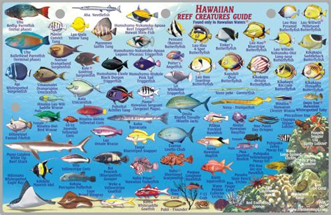 the ultimate guide to hawaiian reef fishes sea turtles lanai reef franko s fabulous maps of favorite places