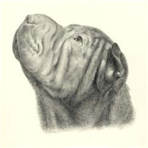 infinity tattoo pei drawing of shar pei wrinkles aren t all bad 169 pinterest