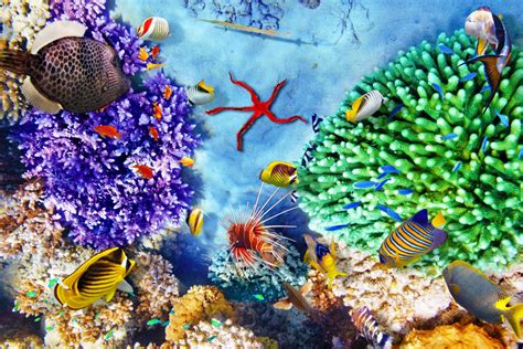 Belize Sweepstakes Travel Channel - best diving and snorkeling in belize belize destination guide central america